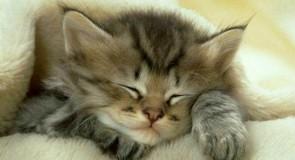 Comment bien dormir la nuit ?