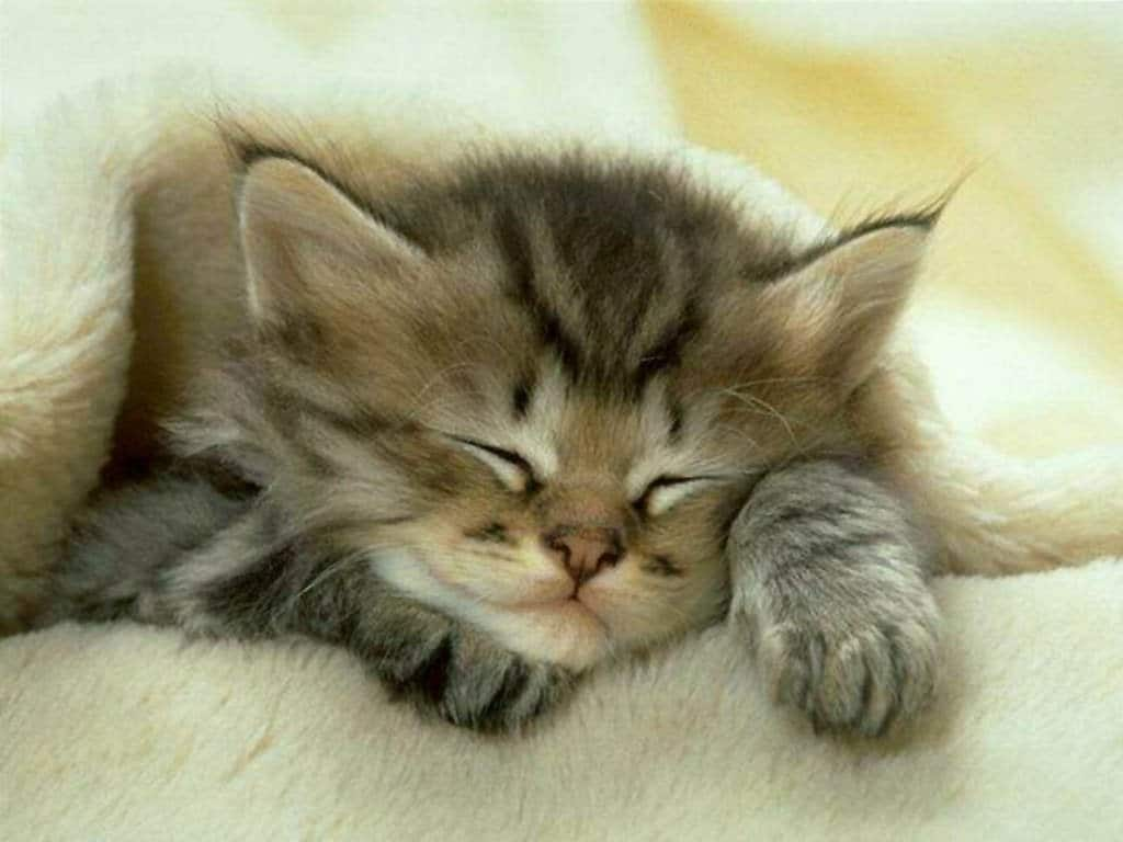 dormir la nuit