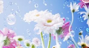 Signification spirituelle du printemps