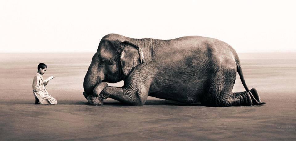 yoganice_la_lecon_de_l_elephant