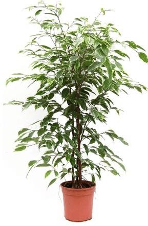 plante interieur nettoyante