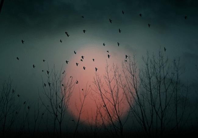 Lune oiseaux