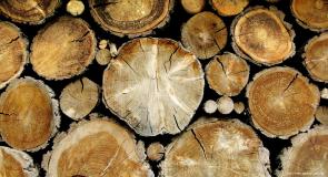 Rêver de bois