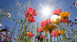 Le langage des fleurs… Dans les rêves
