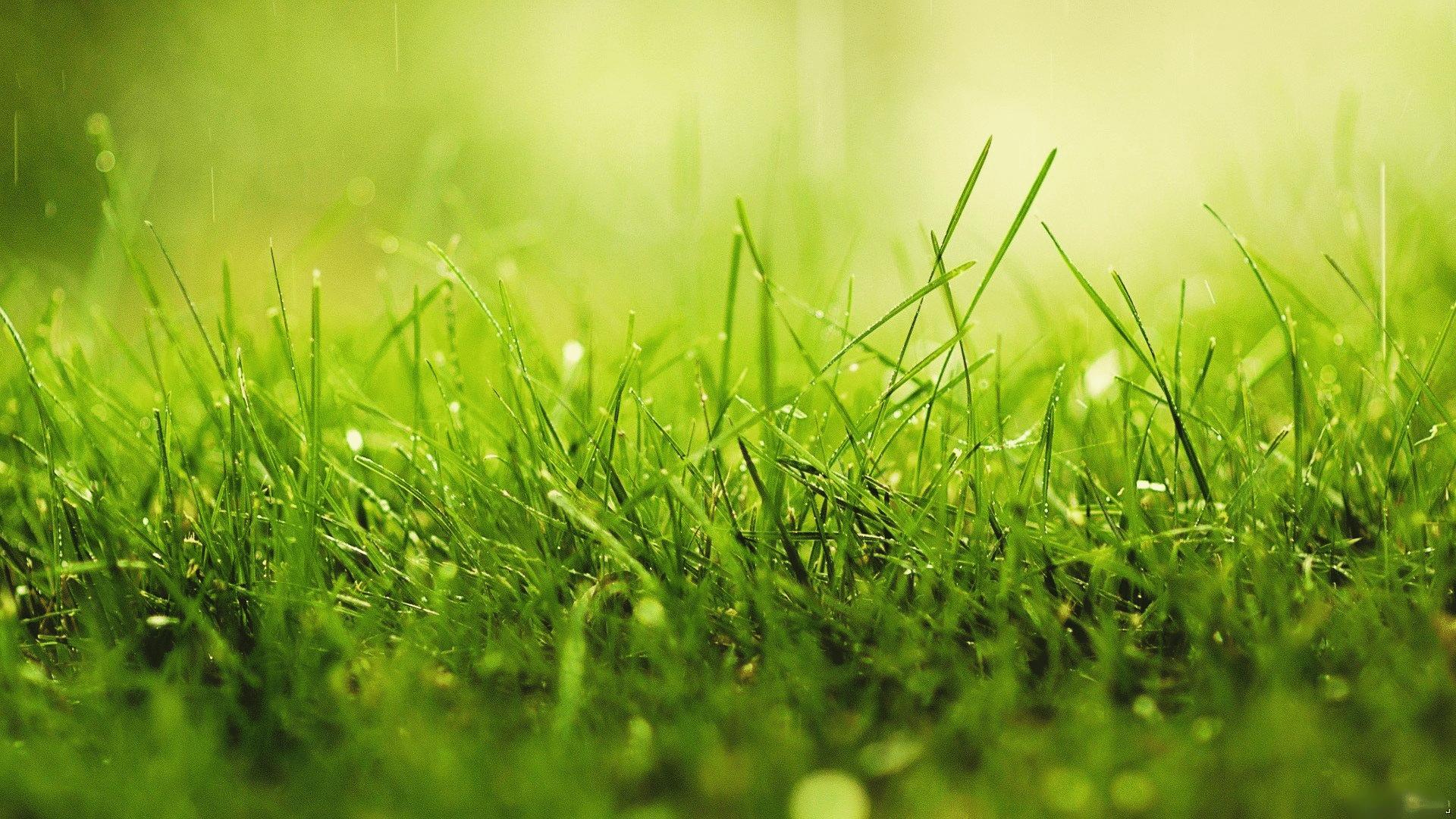 Interpr tation des r ves r ver d 39 herbe divinatix for Like long grasses