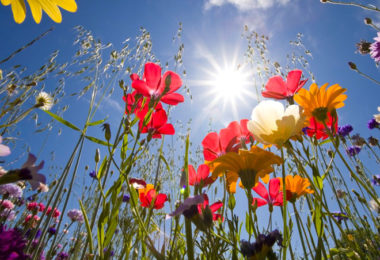 signification des fleurs dans les rêves